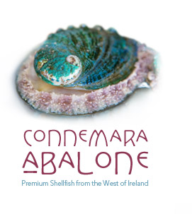 Irish Abalone